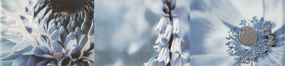 Maxima blue 2